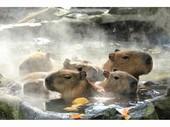 カピバラ露天風呂2013年度_JALAN_131119.jpgのサムネイル画像のサムネイル画像