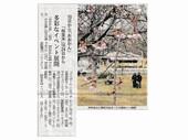 伊豆高原さくら祭_JALAN_180228.jpg