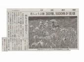 花しょうぶ_JALAN_180602.jpg