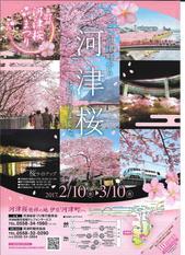 河津桜おもて.jpg