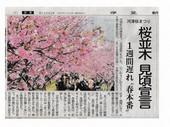 河津桜まつり_JALAN_180227.jpg