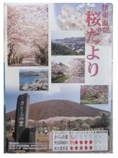 開花情報3・26.jpg